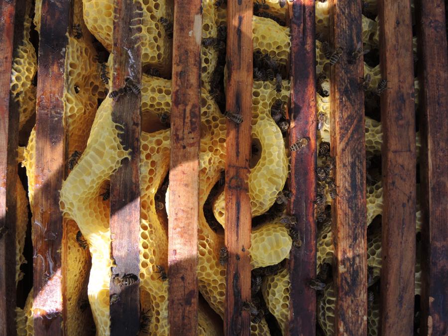 AUW: Egyedüllét méhekkel, 2021